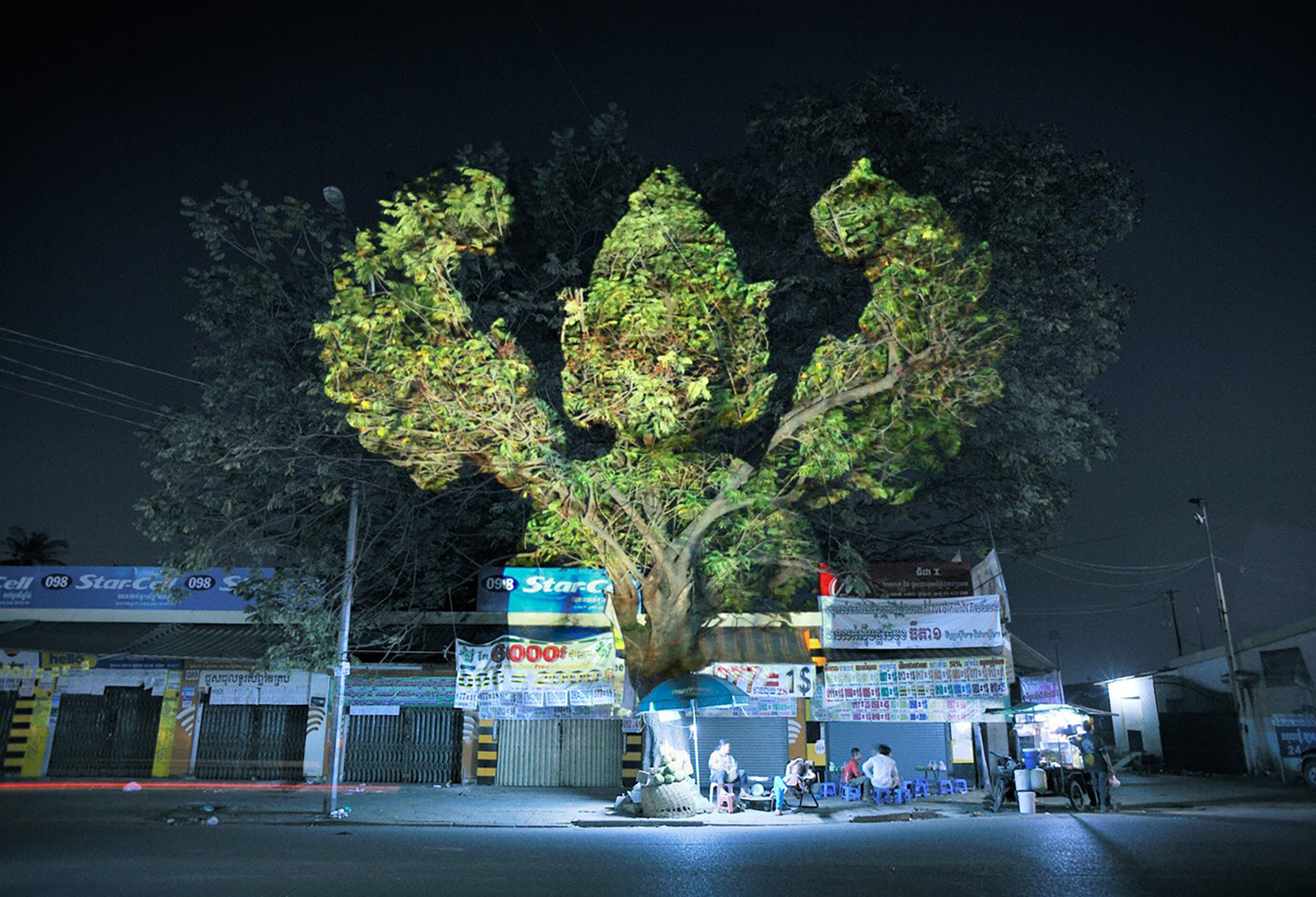 Cambodian Trees 01