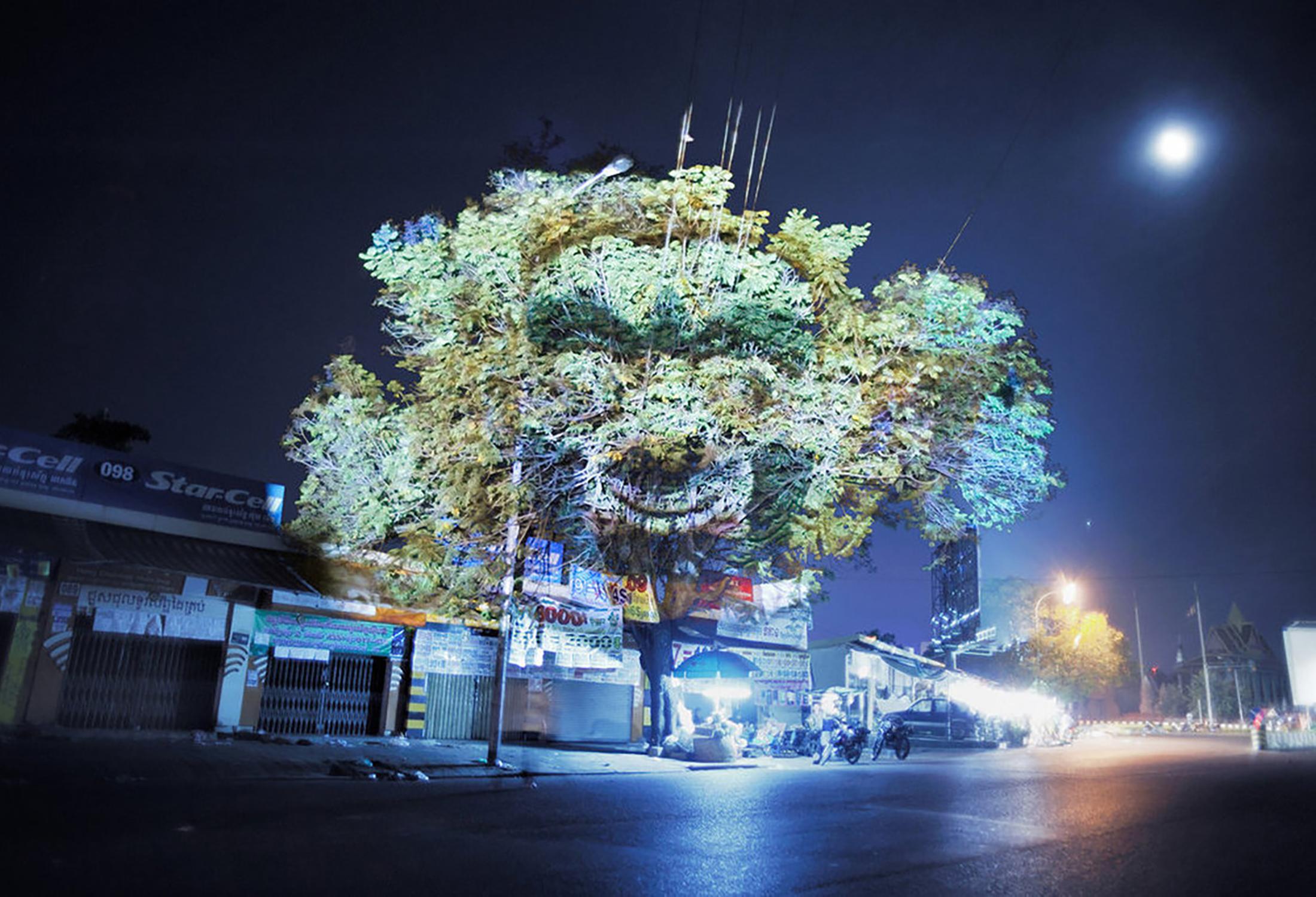 Cambodian Trees 02