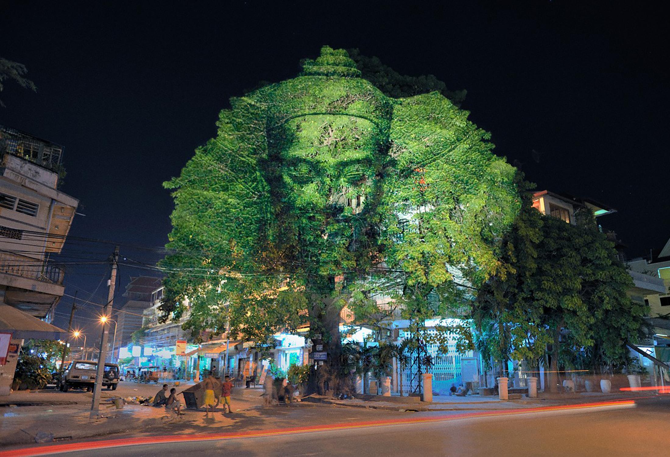 Cambodian Trees 05