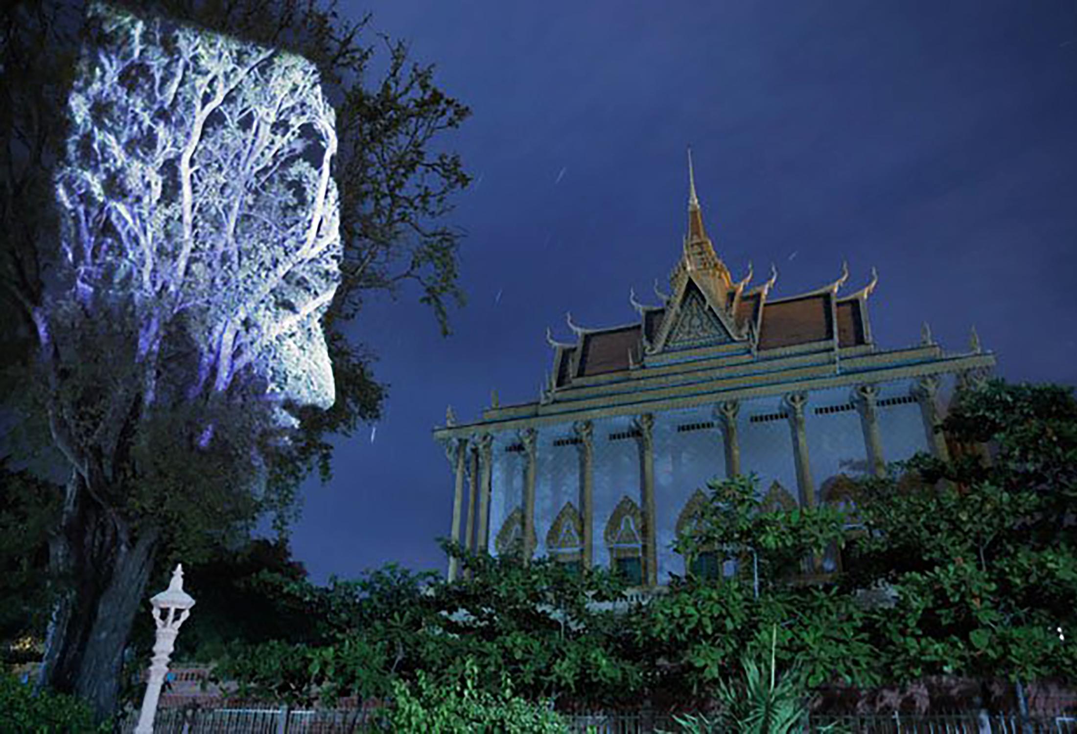 Cambodian Trees 07