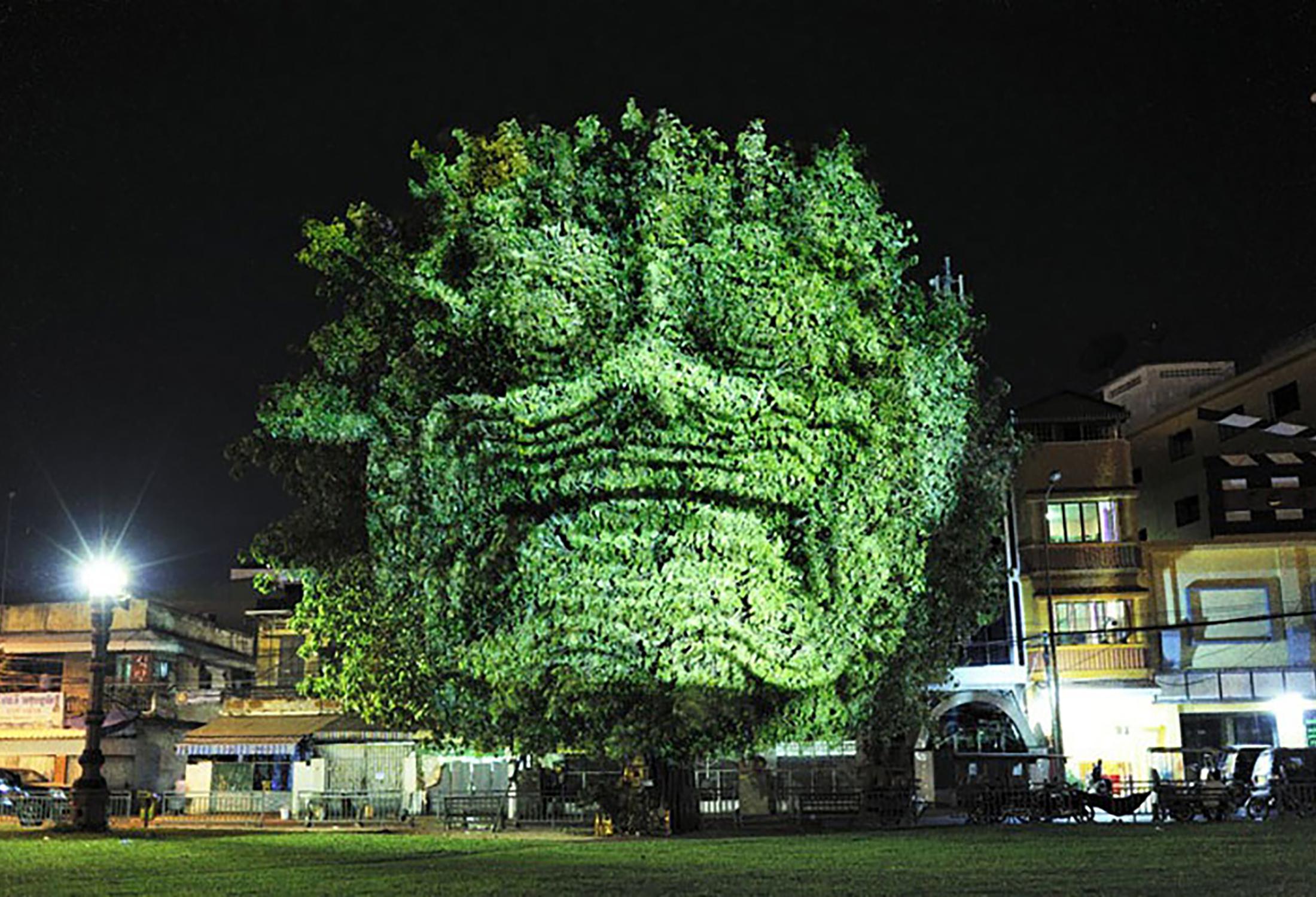 Cambodian Trees 08