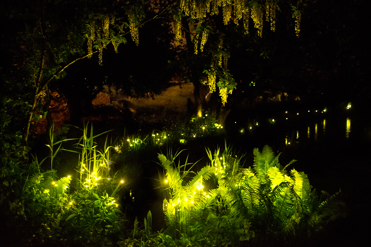 Light Art Festival Installations Tamar Frank Lampyris